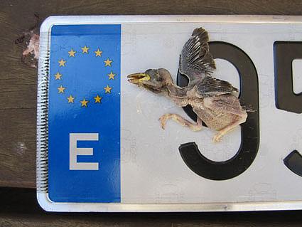 20110716103928-europa-1.jpg