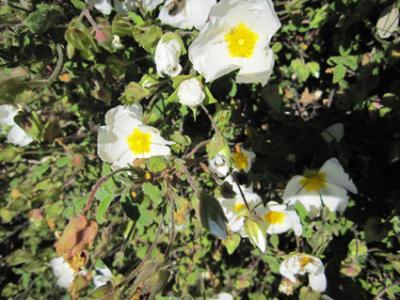 La primavera española